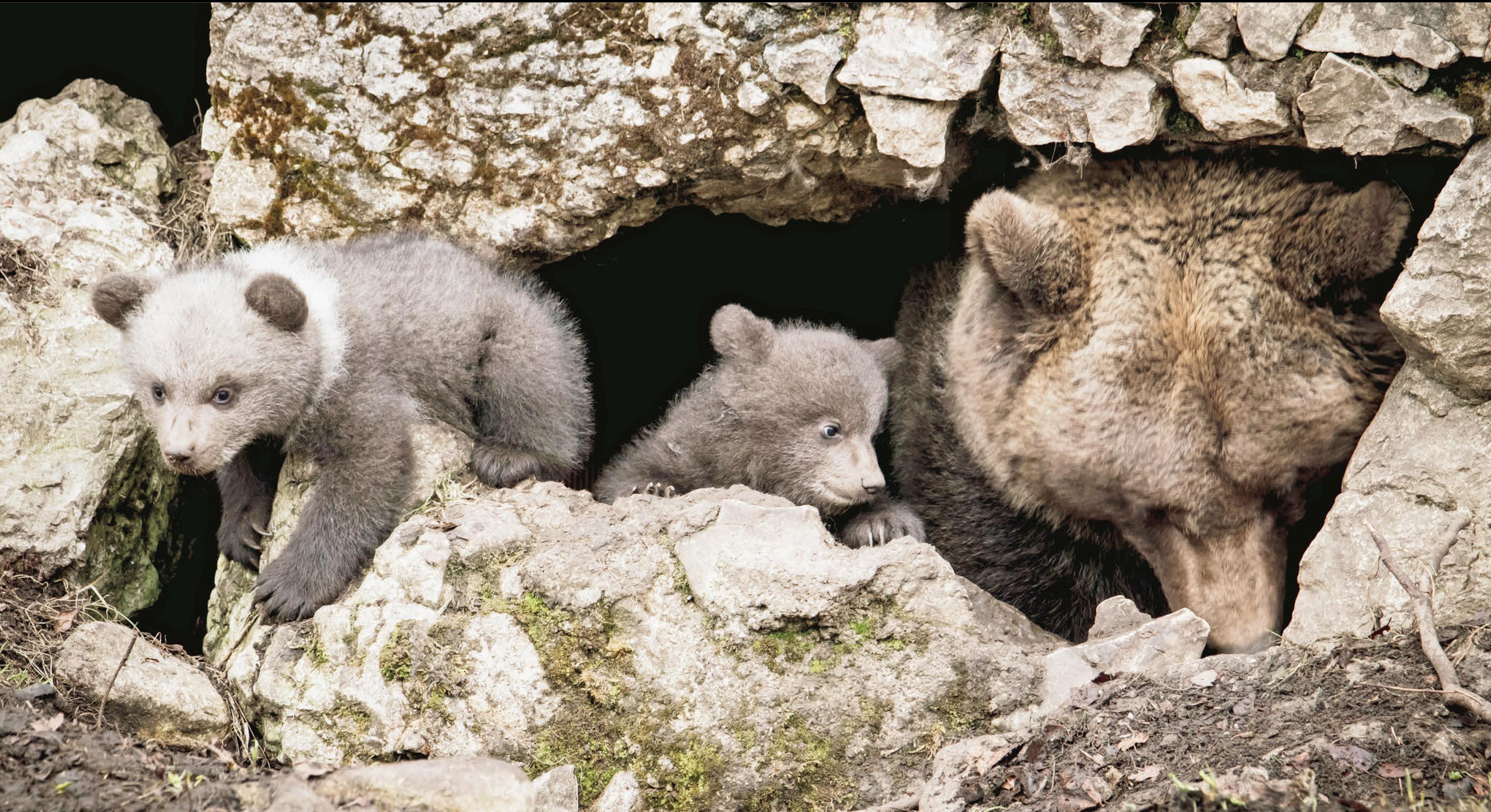 Trois oursons font le printemps de Juraparc