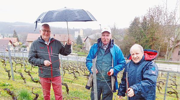 Pompaples – Traitement de la vigne