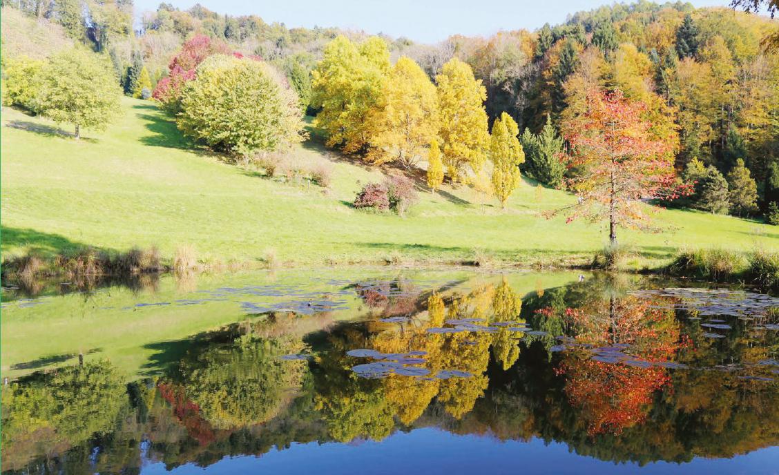 Aubonne – Course populaire de l'Arboretum le 6 octobre