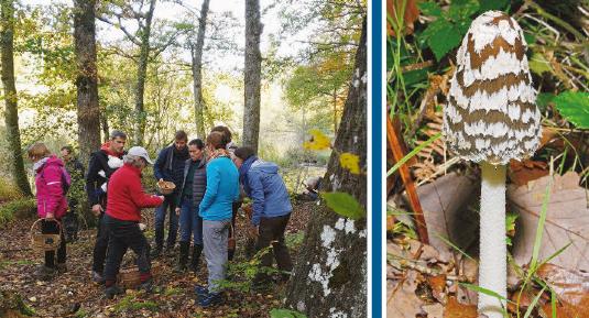 Cossonay – Groupement mycologique