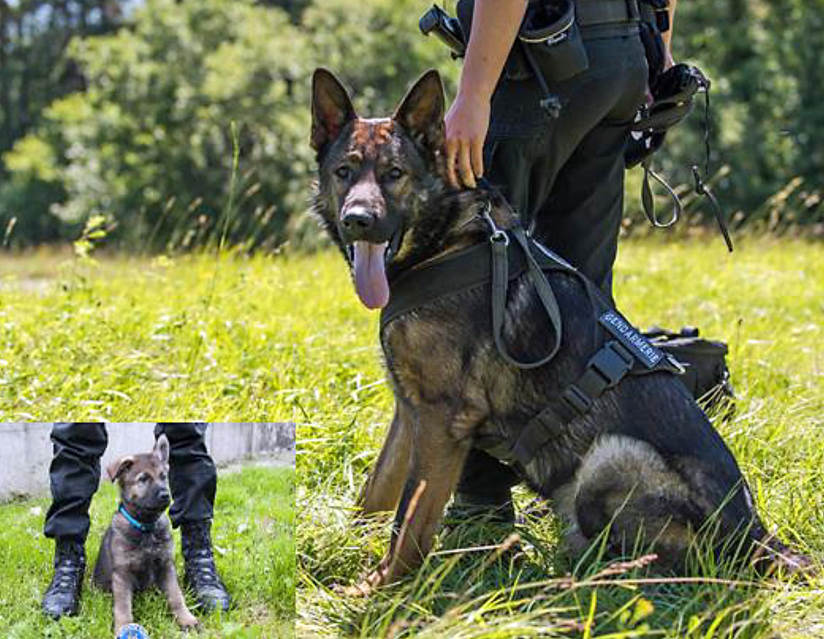 La Sarraz : deux cambrioleurs arrêtées grâce à un chien policier